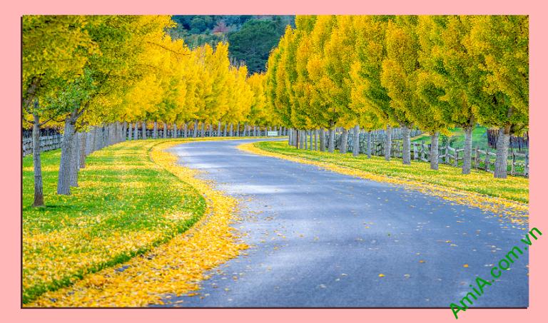 Tranh phong cảnh hàng cây mùa thu lá vàng khổ cỡ lớn