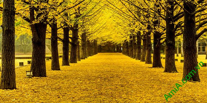 Tranh phong cảnh khổ lớn hàng cây mùa thu lá vàng