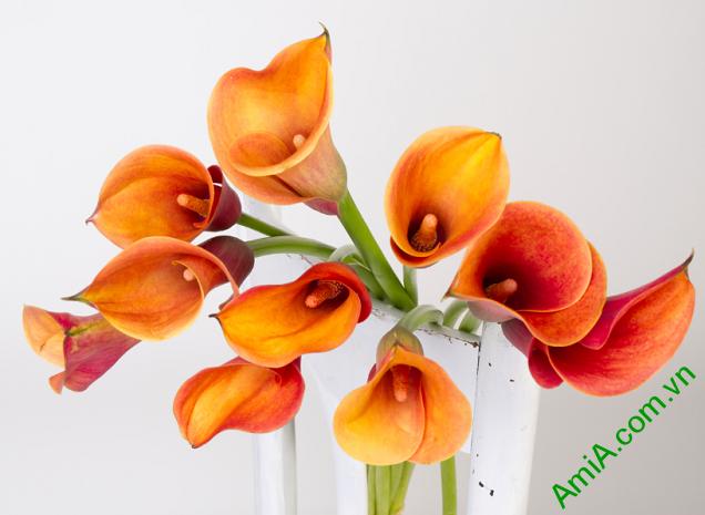 Tranh hoa zum đẹp treo phòng ngủ