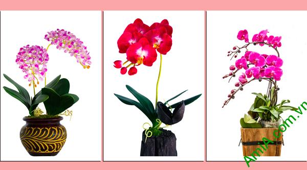Mẫu tranh hoa phong lan đẹp
