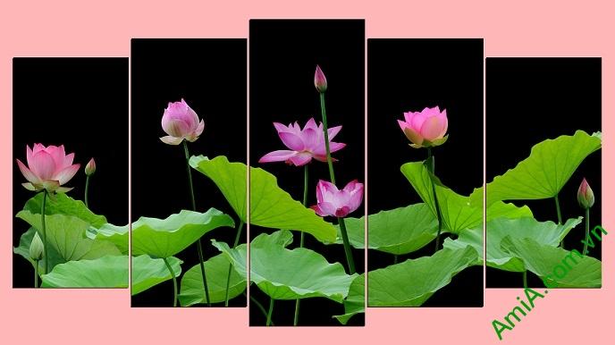 Tranh hoa sen đẹp ghép bộ nhiều tấm