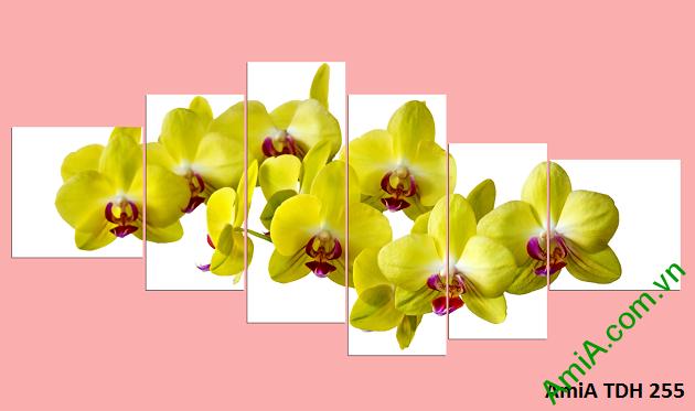 Tranh gheo bộ nhiều tấm hoa lan vàng