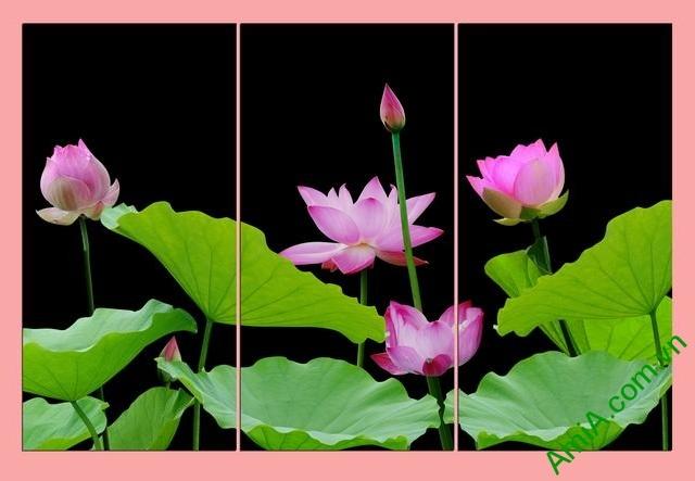 Tranh treo tường hoa sen