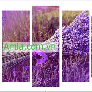 tranh-lavender-dep-amia-2007-1