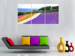 tranh canh dong hoa lavender