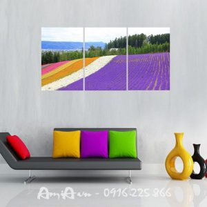 tranh canh dong hoa lavender