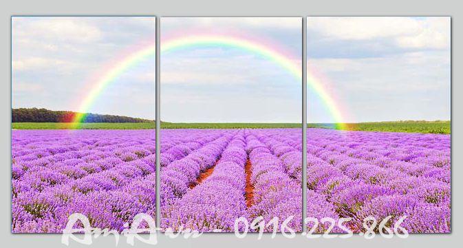 tranh hoa lavender dep