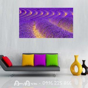 tranh canh dong hoa oai huong