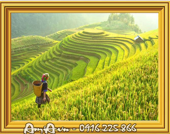 tranh phong canh canh dong lua chin