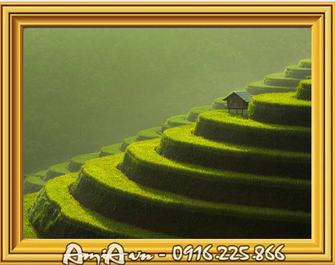 tranh phong canh ruong lua bac thang