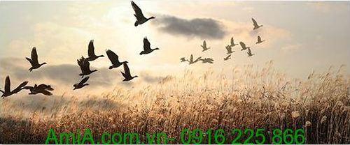 tranh phong canh dan chim tro ve