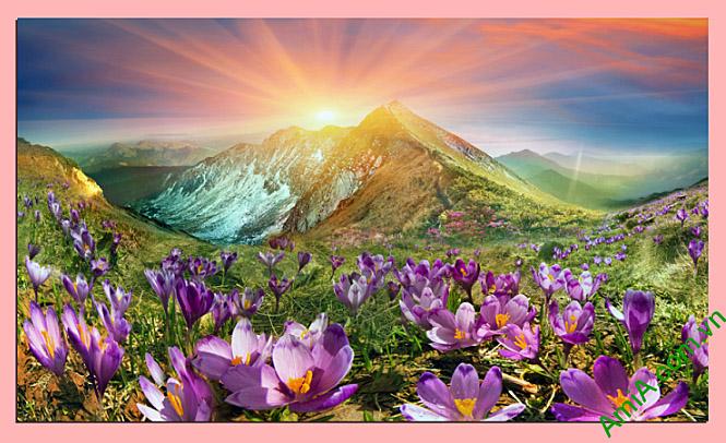 tranh phong canh doi hoa luc binh minh dep