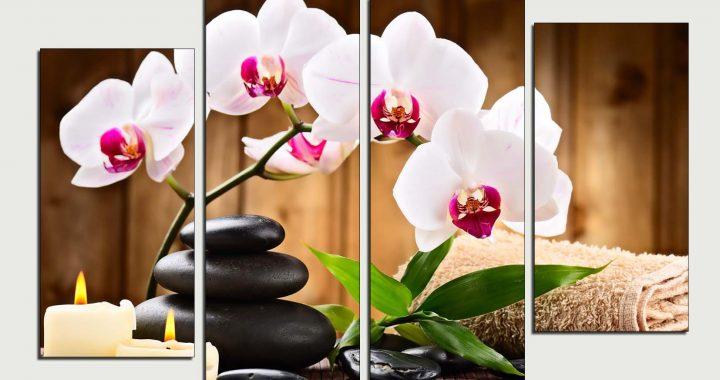 tranh spa dep hoa lan trang dem den su tinh te cho dai sanh