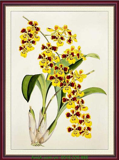 tranh nhanh hoa lan dai trang tri phong mang lai may man