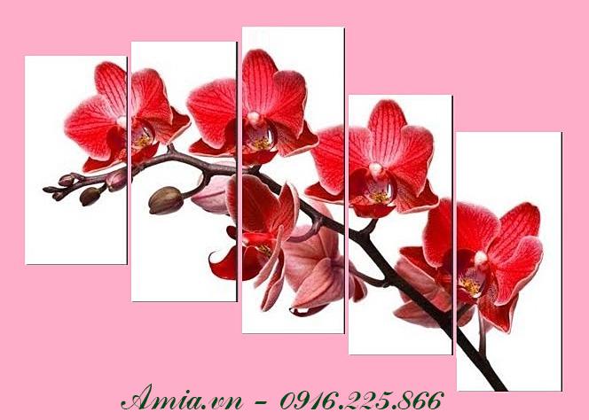 tranh dep treo tet nhanh hoa lan dem den su may man