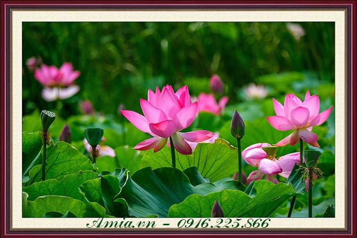 tranh khach san dam hoa sen dep