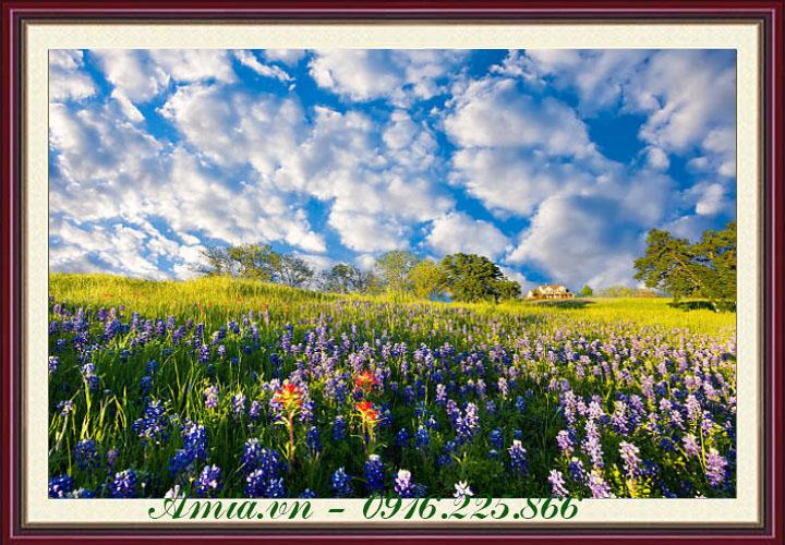 tranh phong canh binh minh tren doi hoa xanh duong