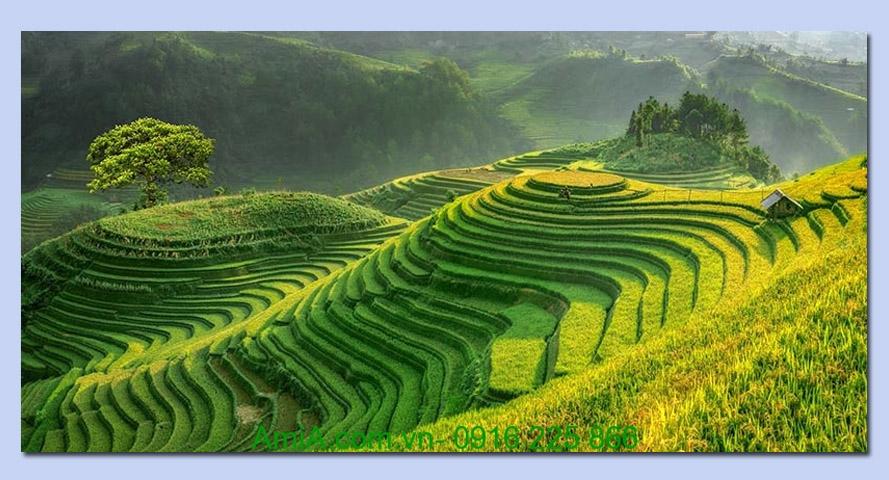 tranh phong canh doi nui ruong lua bac thang