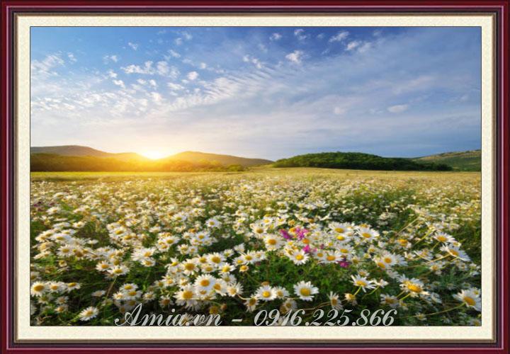 tranh phong canh dong hoa cuc hoa mi