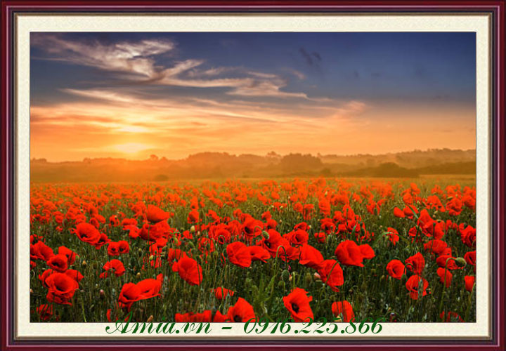 tranh phong canh binh minh tren dong hoa poppy