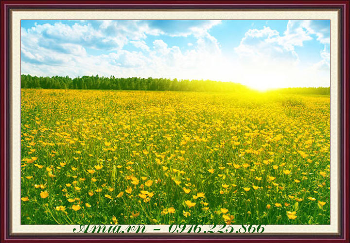 tranh phong canh canh dong hoa luc binh minh