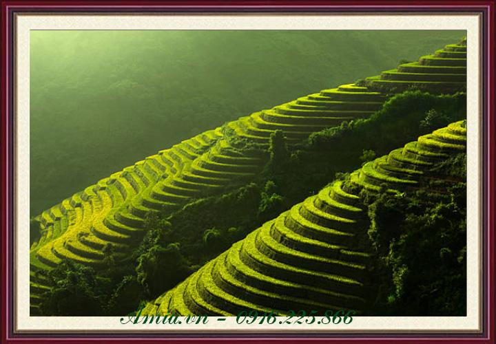 tranh canh dep vung cao ruong lua bac thang