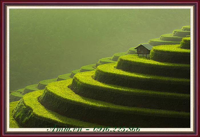 tranh phong canh ruong bac thang xanh muot