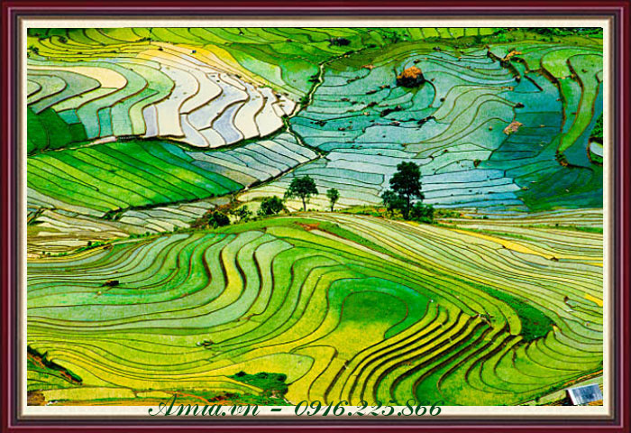 tranh phong canh ruong lua chin bac thang kho mot tam