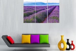 tranh treo tuong dong hoa lavender