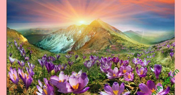 tranh phong canh doi hoa