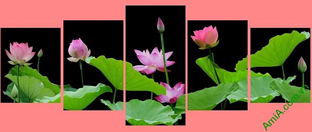 tranh hoa sen phong thuy ghep bo cach dieu