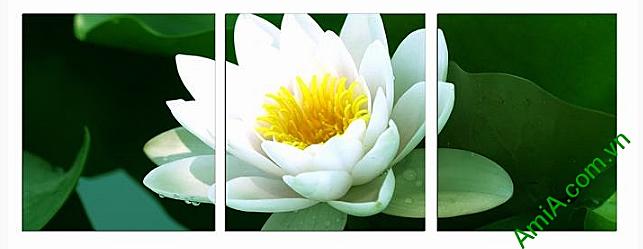 tranh hoa sen phong thuy gam mau trang dem den su tinh te