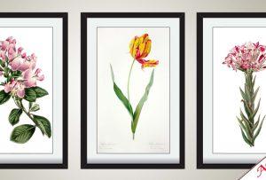 8. Tranh hoa lá