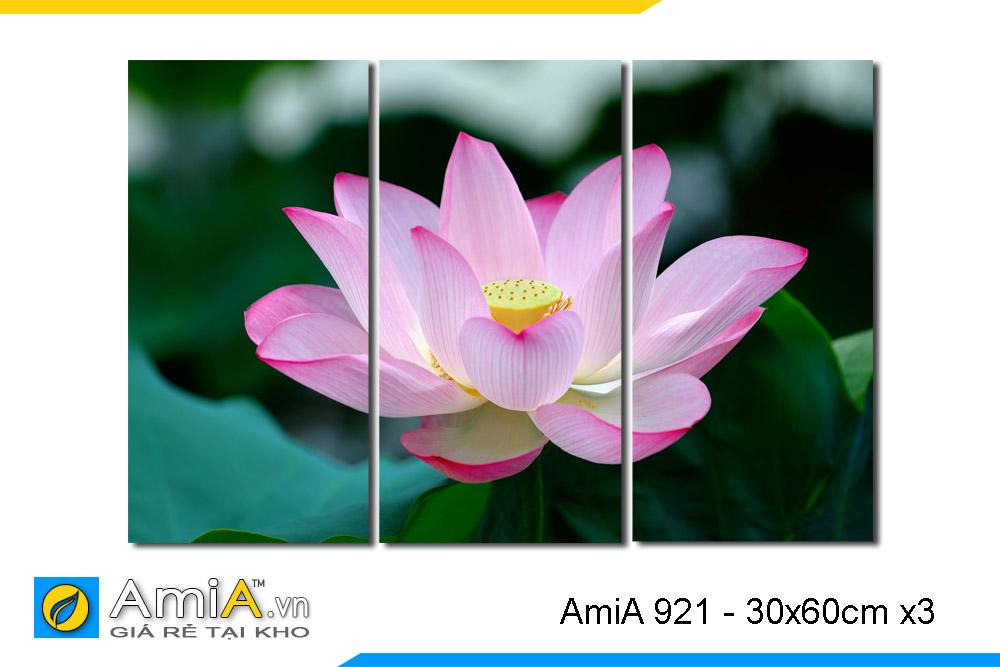 tranh 1 bông hoa sen to màu hồng