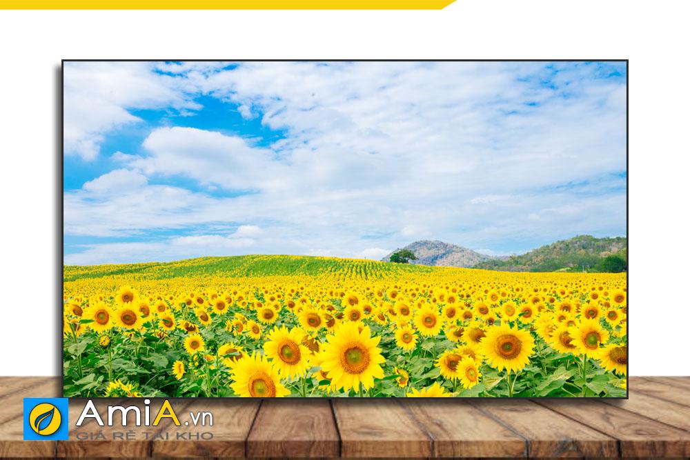 tranh đẹp về cánh đồng hoa