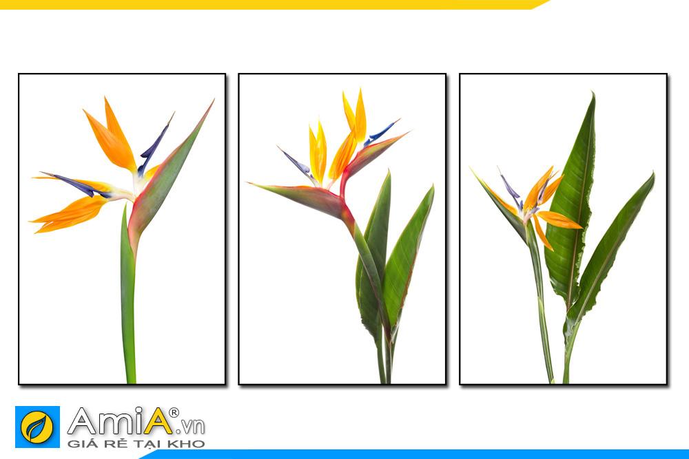Tranh canvas hoa thiên điểu ghép bộ 3 tấm amia1846