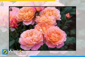 Hình ảnh Tranh treo tường hoa hồng đẹp lãng mạn AmiA HH02
