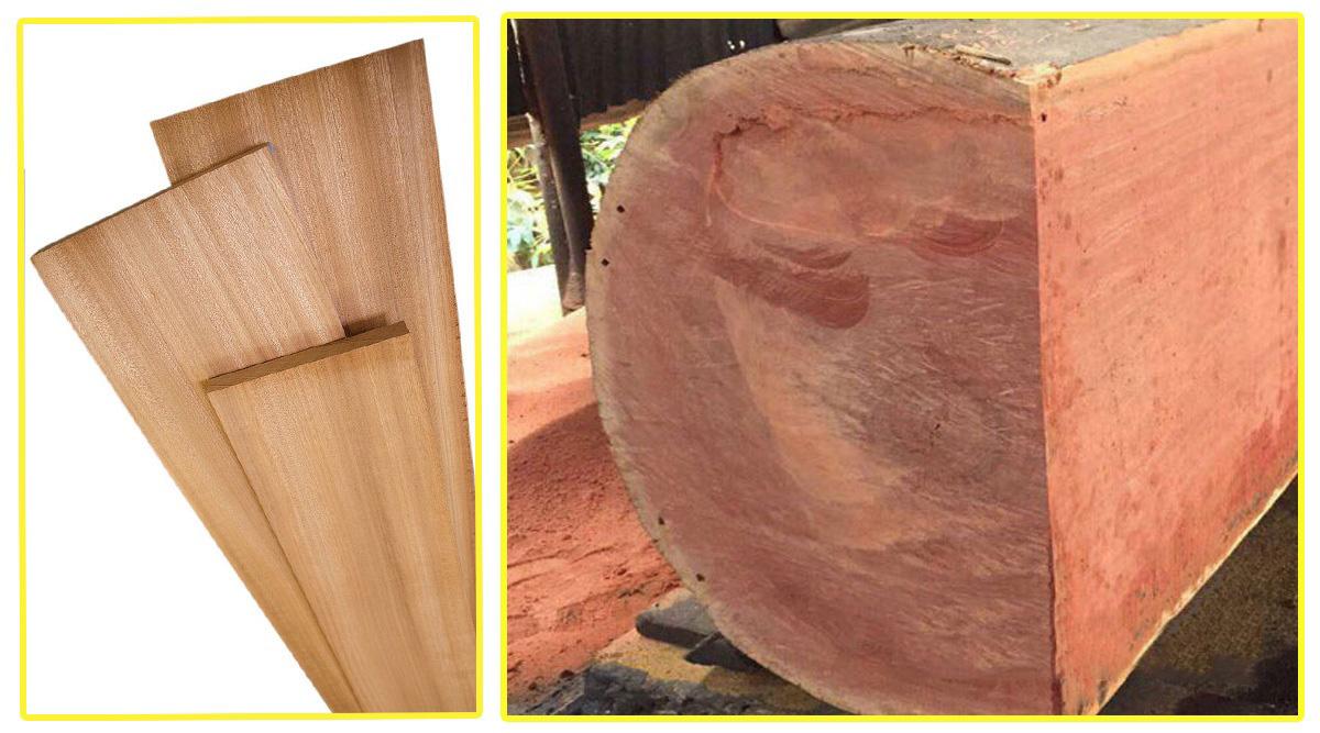 Hình ảnh thân gỗ Xoan đào với màu hồng đào đẹp mắt