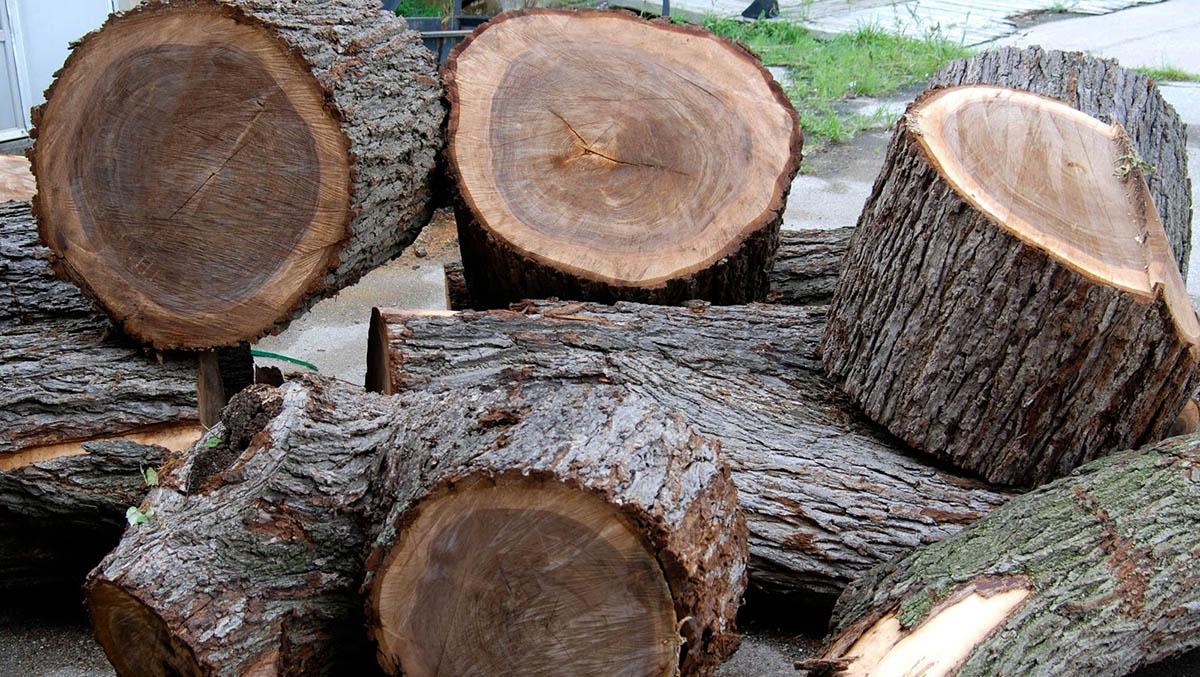 thân cây gỗ óc chó
