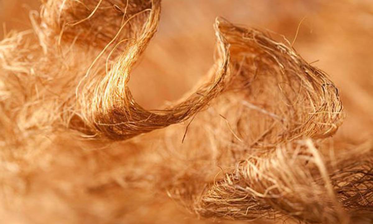 Hình ảnh cụ thể về sợi xen lu lô zơ của gỗ